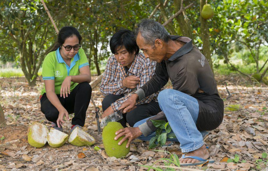 Khun Nipalin met Jackfruit uit de boom
