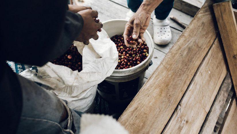 Community Coffee - koffie selectie