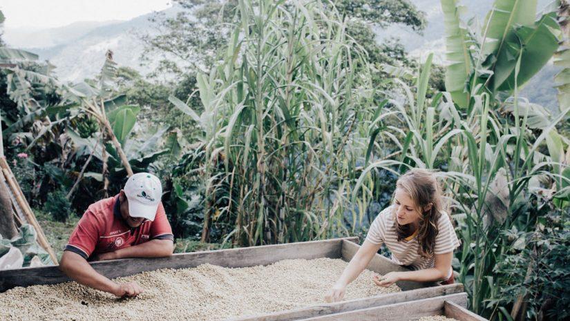Fairtrade Original, Koffie droogbak