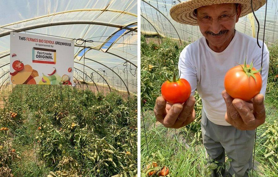 Kas Fermes Bio Sehoul en tomatenteler Mohammed in Rabat