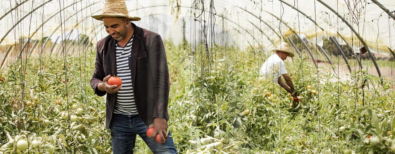 Fairtrade Original - tomatenboer in Marokko