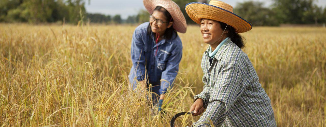 Fairtrade Original Rijstboerinnen Thailand